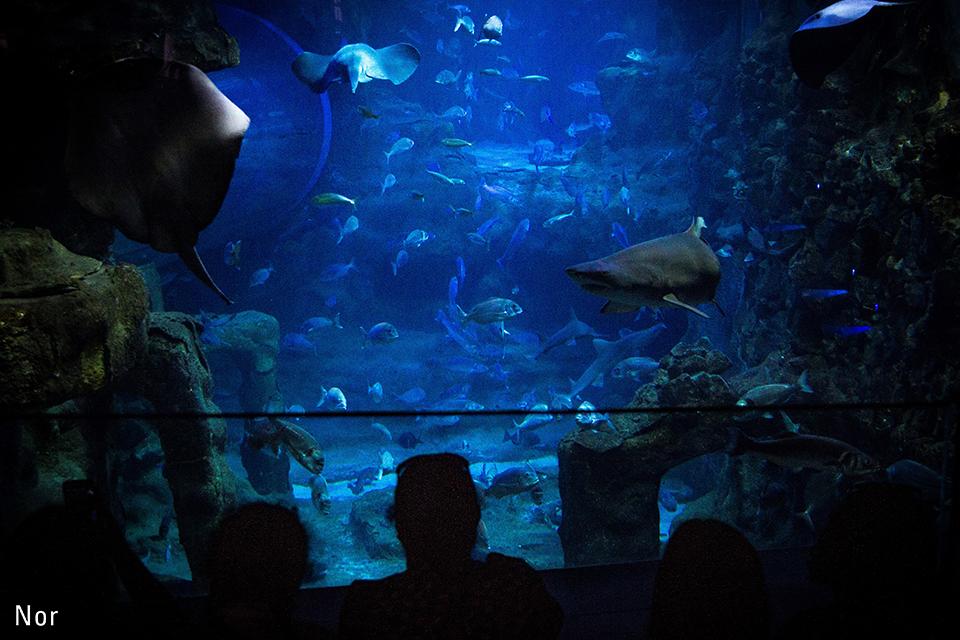 Donostiako Aquariumean bisitariak marrazo eta beste arrain ikusten