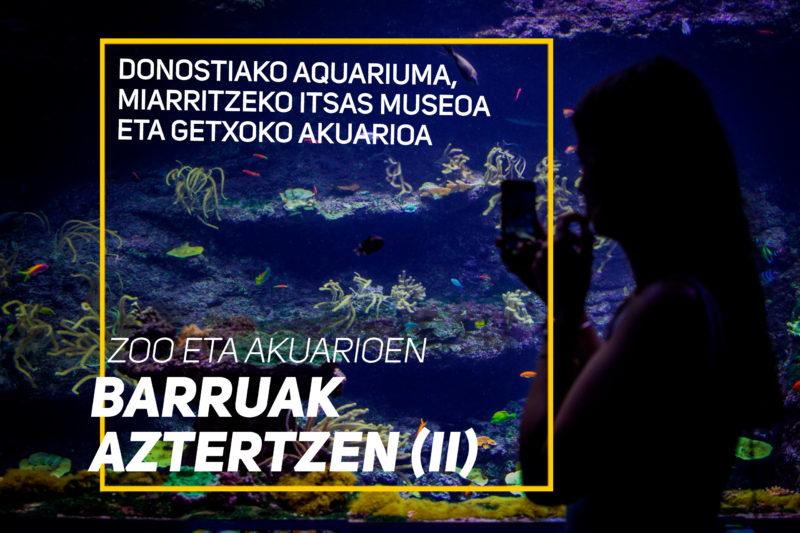 Donostiako Aquariuma, Miarritzeko Itsas Museoa eta Getxoko akuarioa – Zoo eta akuarioen barruak aztertzen (II)