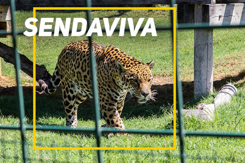 Sendaviva – Zoo eta akuarioen barruak aztertzen (I)