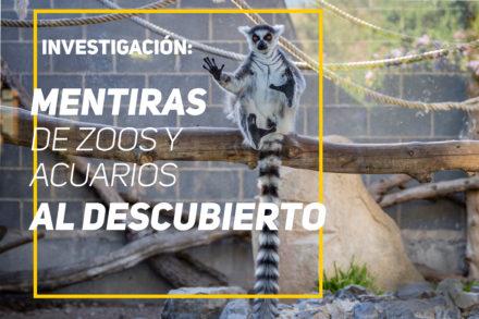 Investigación: Mentiras de zoos y acuarios al descubierto