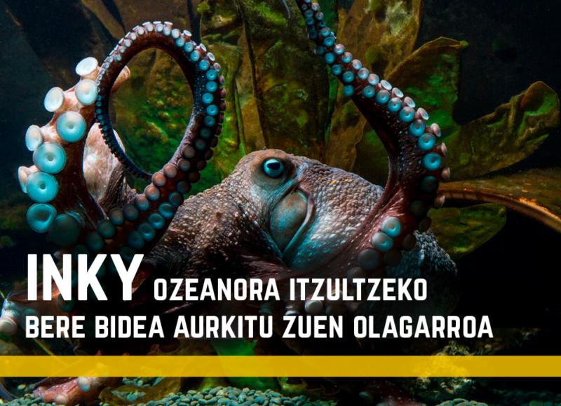 Inky, ozeanora itzultzeko bere bidea aurkitu zuen olagarroa